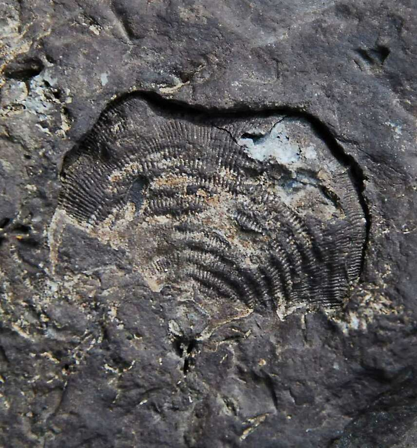 The Thing - The fossilized remains of a brachiopod, frozen in time. (Bill Danielson)