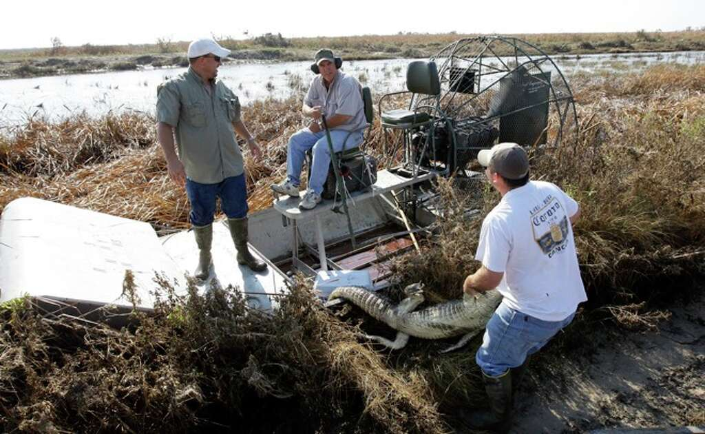 Roger Abshier, right, pulls an alligator out of the airboat as Mark Porter,