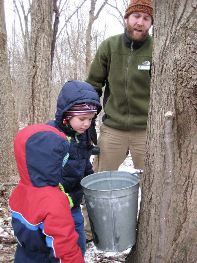 Families will have the chance to collect their own fresh Connecticut maple syrup when the New Canaan Nature Center hosts Adopt a Sugar Maple Tree on Saturday, Feb. 5. Photo: Contributed Photo / Connecticut Post Contributed
