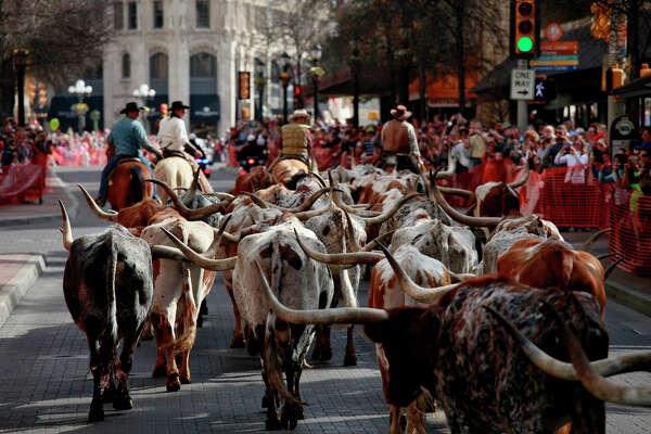 Cowboys lead Longhorns on Houston Street toward the Alamo during the Texas Longhorn Cattle Drive in downtown San Antonio.