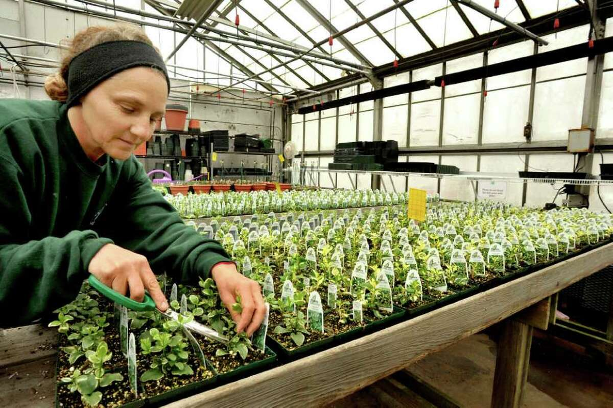 Carolyn Oggeri pinches vinca to make it fuller at Lexington Gardens in Newtown, in this 2010 file photo.
