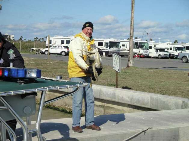 Volunteer Dennis Sullivan, a winter Texan from Chicago, works with Coast Guard members to rescue green sea turtles from the shores of South Padre Island on Friday, Feb. 4, 2011. Photo: Lynn Brezosky, SAN ANTONIO EXPRESS-NEWS / SAN ANTONIO EXPRESS-NEWS