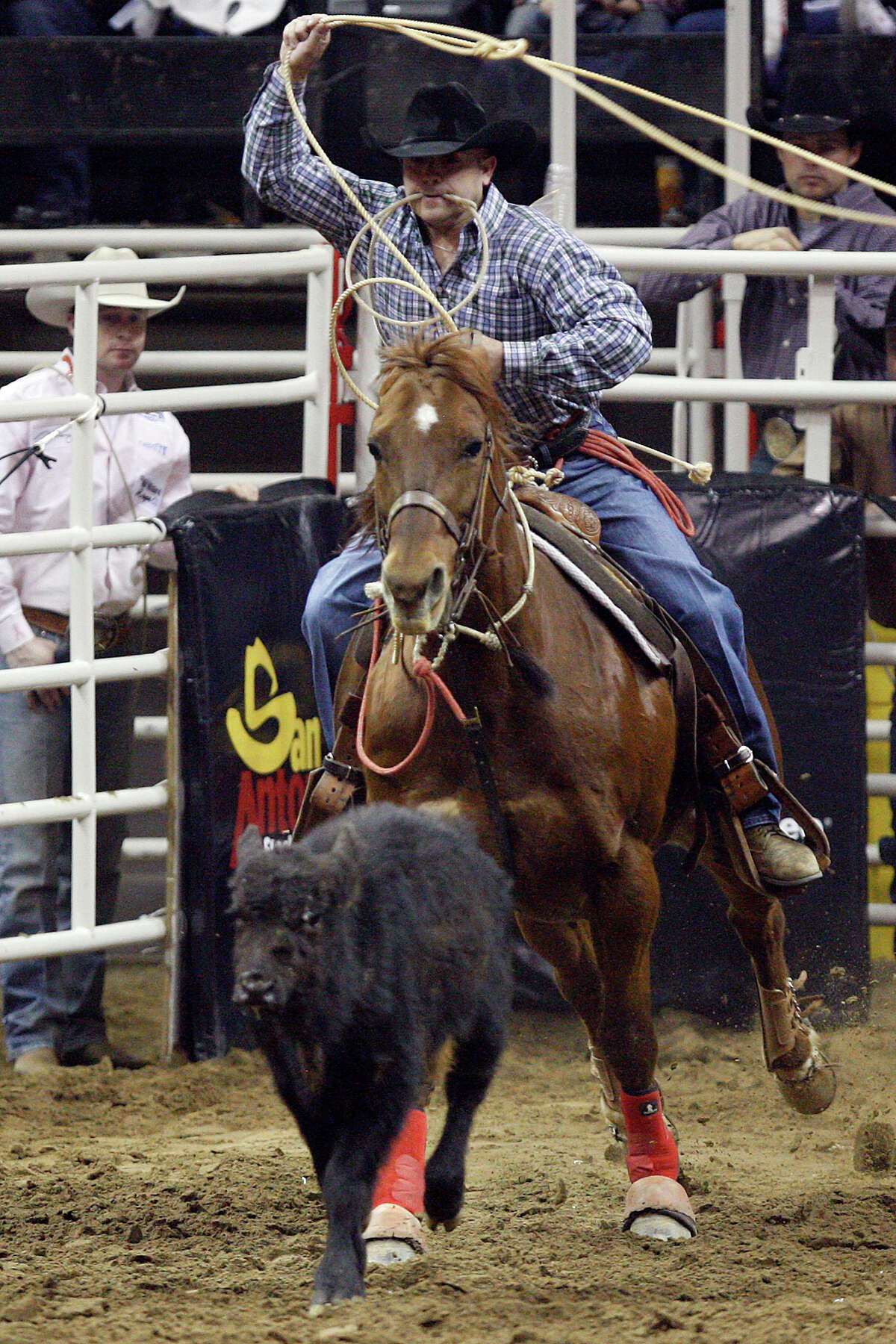 Tie-down roper Scott Kormos, off to a fast start in the competition, comes out of the chute chasing a calf at the San Antonio Stock Show & Rodeo.