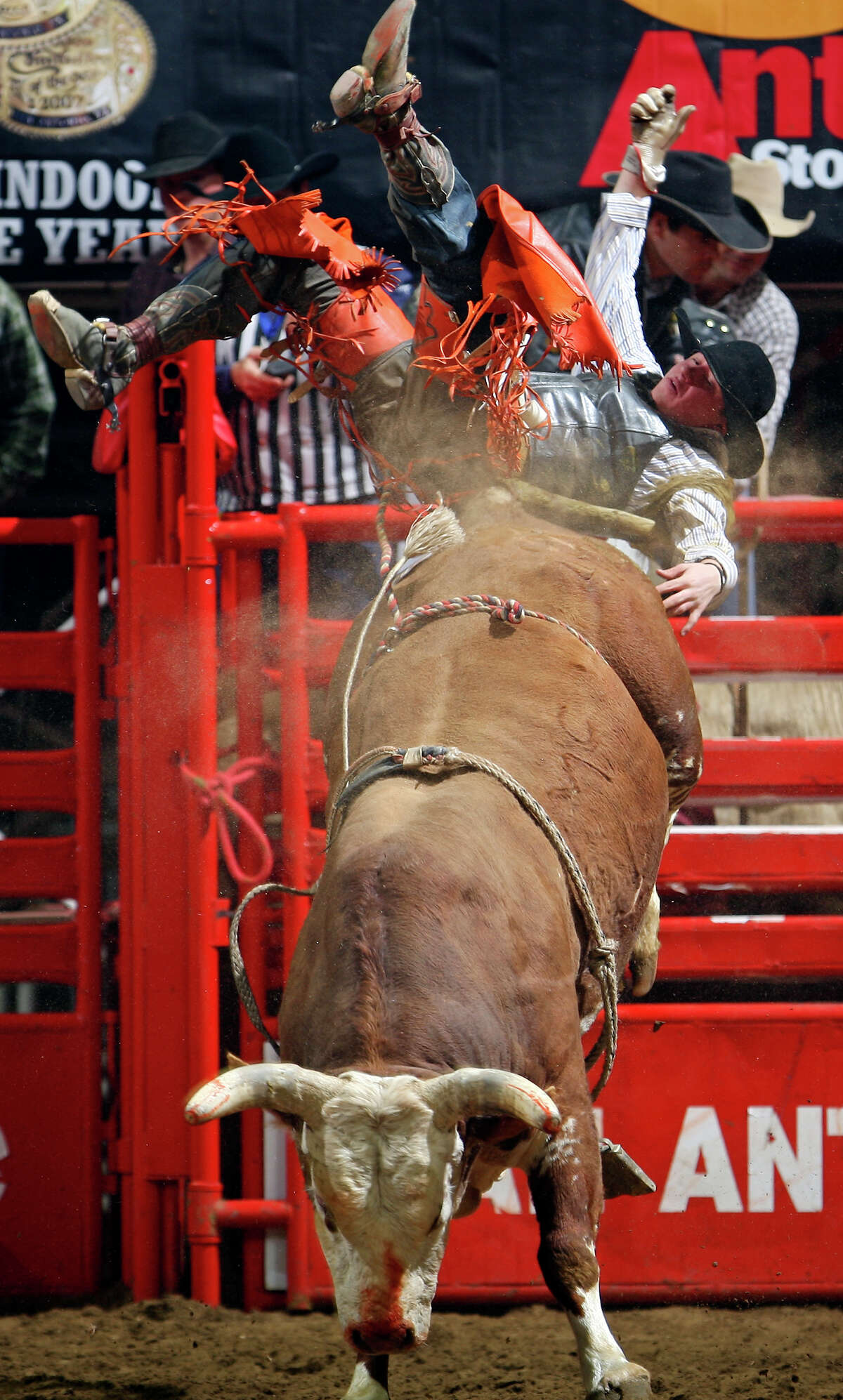 Chris Roundy, from Panguitch, UT, is thrown off his bull in the Bull Riding event Sunday Feb. 13, 2011 during the San Antonio Stock Show & Rodeo at the AT&T Center.