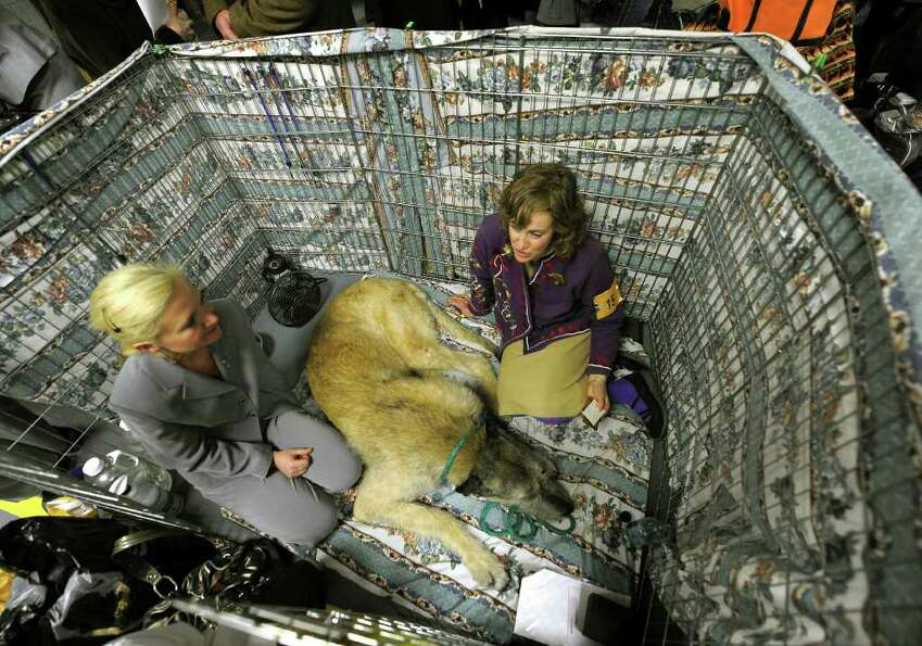 Donna Smith and Eva Boldak sit in kennel with their Irish Wolfhound backstage during the 135th Westm