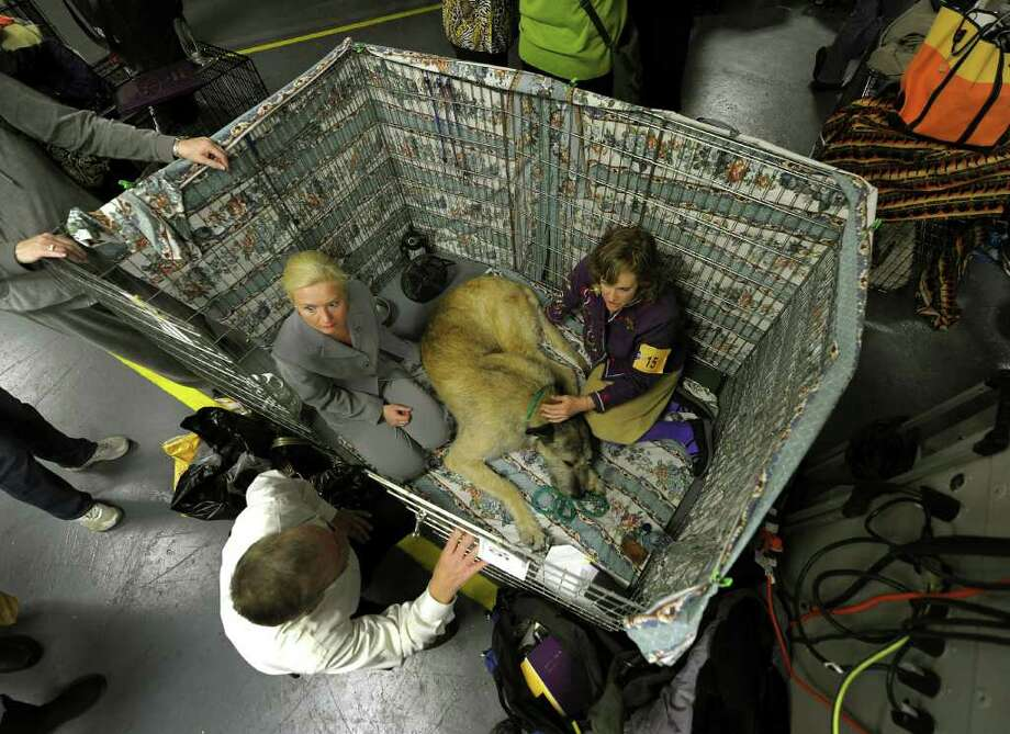 Donna Smith and Eva Boldak sit in the crate with their Irish Wolfhound backstage during the 135th Westminster Kennel Club Dog Show at Madison Square Garden in New York, February 14, 2011. AFP  PHOTO / TIMOTHY A. CLARY (Photo credit should read TIMOTHY A. CLARY/AFP/Getty Images) Photo: TIMOTHY A. CLARY