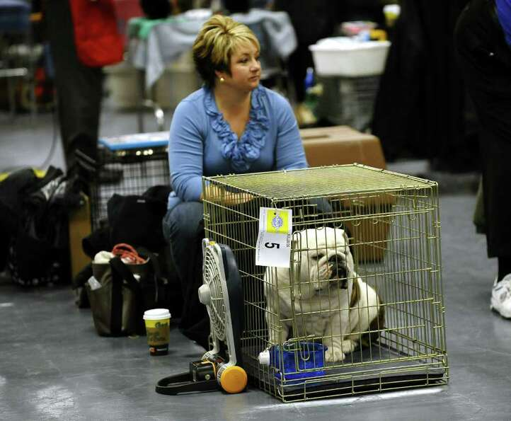 A handler backstage with her Bulldog during the 135th Westminster Kennel Club Dog Show at Madison Sq