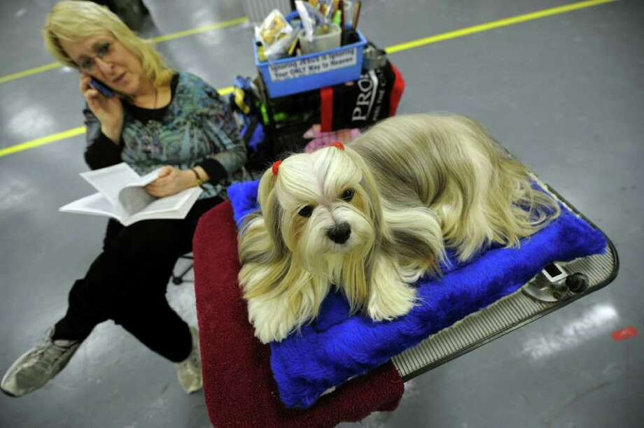 Kathy Kalavoda and Penny the Lhasa Apsos backstage during the 135th Westminster Kennel Club Dog Show at Madison Square Garden in New York, February 14, 2011. AFP  PHOTO / TIMOTHY A. CLARY (Photo credit should read TIMOTHY A. CLARY/AFP/Getty Images) Photo: TIMOTHY A. CLARY
