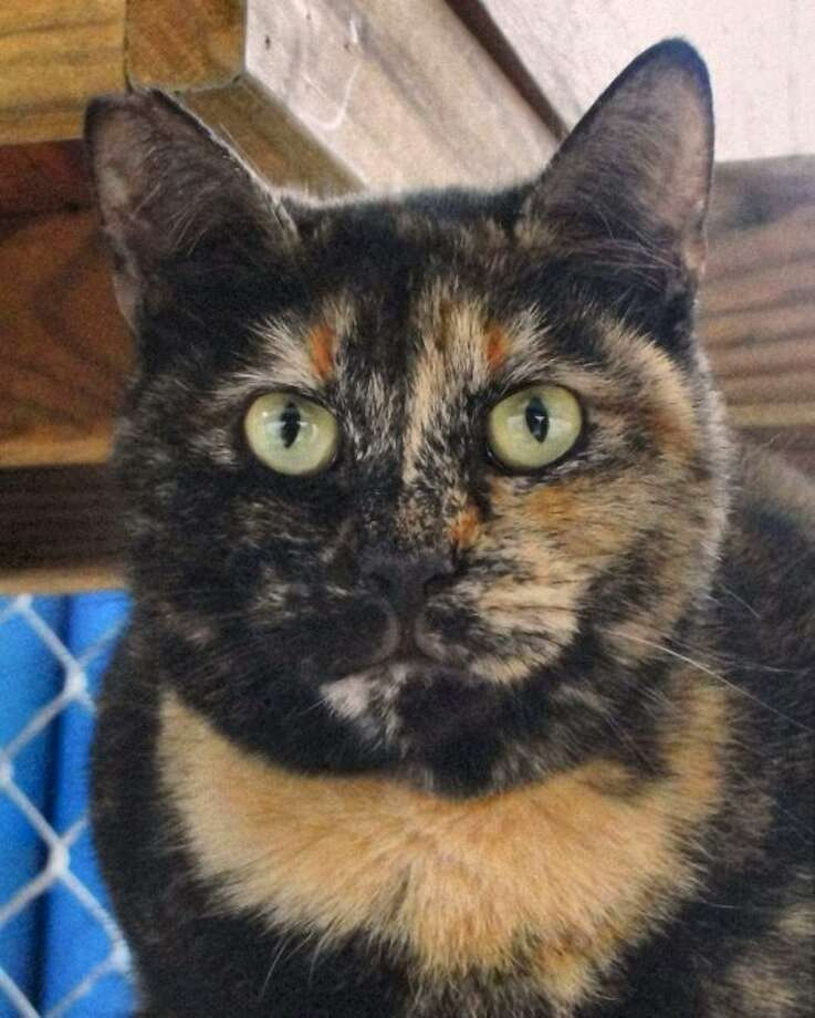 Dorie is available for adoption from the Animal Defense League of Texas