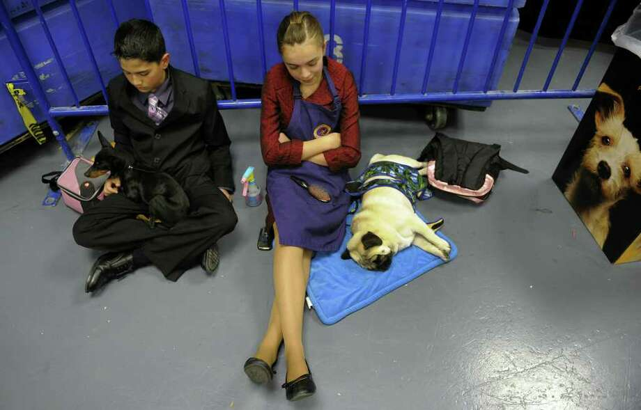 Young children wait with their dogs backstage during the 135th Westminster Kennel Club Dog Show at Madison Square Garden in New York, February 14, 2011. AFP  PHOTO / TIMOTHY A. CLARY (Photo credit should read TIMOTHY A. CLARY/AFP/Getty Images) Photo: TIMOTHY A. CLARY