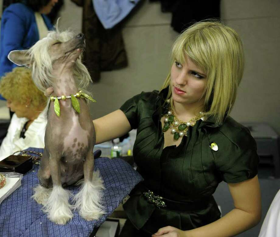 Bess Cleveland and Sugar the Chinese Crested pose during the 135th Westminster Kennel Club Dog Show at Madison Square Garden in New York, February 14, 2011. AFP  PHOTO / TIMOTHY A. CLARY (Photo credit should read TIMOTHY A. CLARY/AFP/Getty Images) Photo: TIMOTHY A. CLARY
