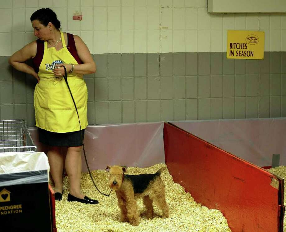 A dog uses the bathroom area in the benching area during the 135th Westminster Kennel Club Dog Show at Madison Square Garden in New York, February 15, 2011. AFP  PHOTO / TIMOTHY A. CLARY (Photo credit should read TIMOTHY A. CLARY/AFP/Getty Images) Photo: TIMOTHY A. CLARY