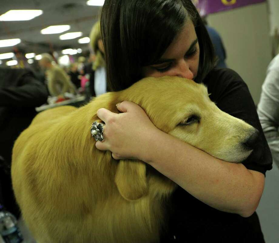 Brittany Dunas and Blue the Golden Retreiver in the benching area during the 135th Westminster Kennel Club Dog Show at Madison Square Garden in New York, February 15, 2011. AFP  PHOTO / TIMOTHY A. CLARY (Photo credit should read TIMOTHY A. CLARY/AFP/Getty Images) Photo: TIMOTHY A. CLARY