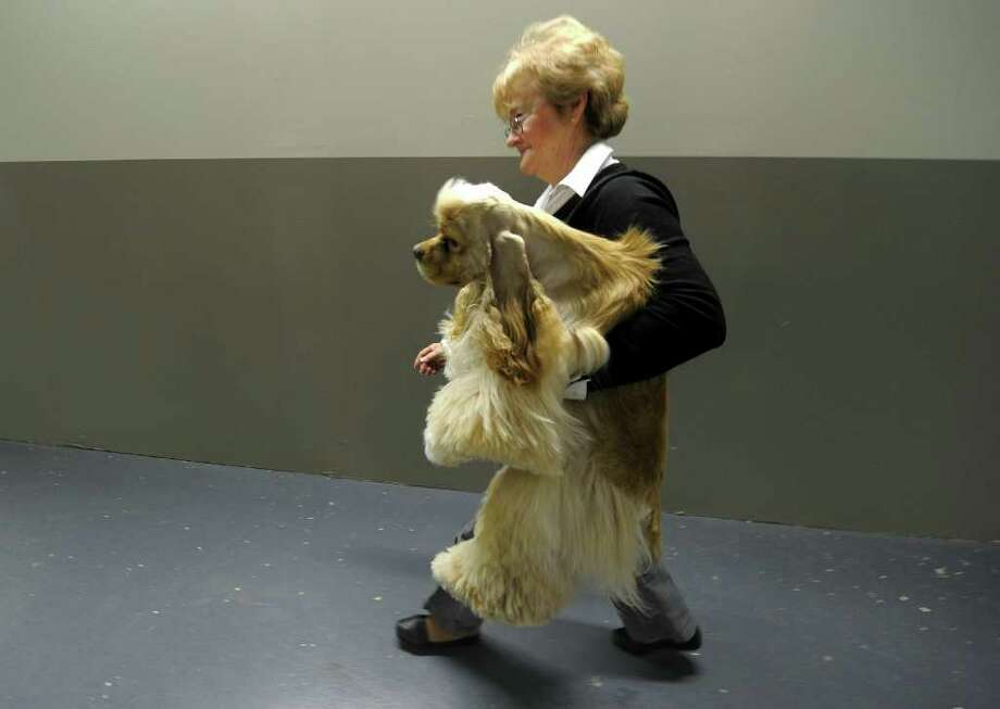 A handler carries her dog back from a bathroom break during the 135th Westminster Kennel Club Dog Show at Madison Square Garden in New York, February 15, 2011. The show, one of the most prestigious dog shows in the world, is being held on February 14-15. Over 2,000 dogs will be competing in this year's show which will also include six new breeds to the competition. AFP  PHOTO / TIMOTHY A. CLARY (Photo credit should read TIMOTHY A. CLARY/AFP/Getty Images) Photo: TIMOTHY A. CLARY