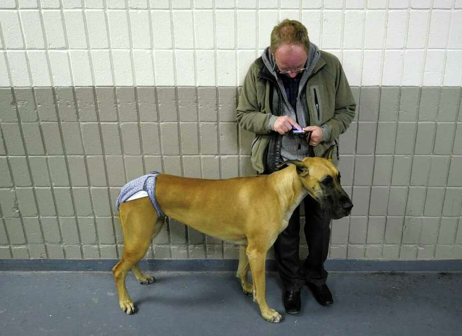 A handler and his Great Dane waits to go in the ring during the 135th Westminster Kennel Club Dog Show at Madison Square Garden in New York, February 15, 2011. The show, one of the most prestigious dog shows in the world, is being held on February 14-15. Over 2,000 dogs will be competing in this year's show which will also include six new breeds to the competition.AFP  PHOTO / TIMOTHY A. CLARY (Photo credit should read TIMOTHY A. CLARY/AFP/Getty Images) Photo: TIMOTHY A. CLARY