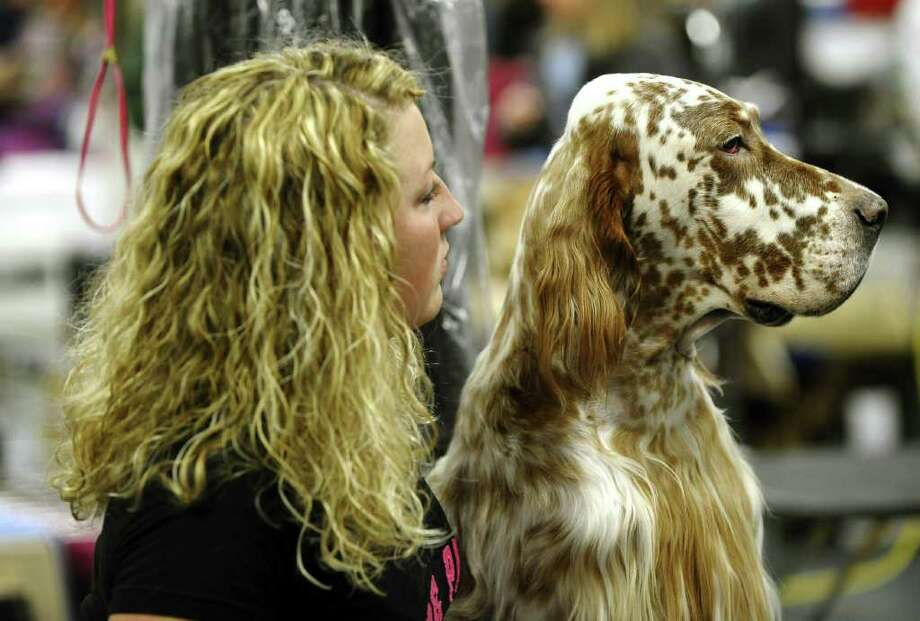 Lindsey Kuhn and Logan her English Setter backstage during the 135th Westminster Kennel Club Dog Show at Madison Square Garden in New York, February 15, 2011. The show, one of the most prestigious dog shows in the world, is being held on February 14-15. Over 2,000 dogs will be competing in this year's show which will also include six new breeds to the competition. AFP  PHOTO / TIMOTHY A. CLARY (Photo credit should read TIMOTHY A. CLARY/AFP/Getty Images) Photo: TIMOTHY A. CLARY