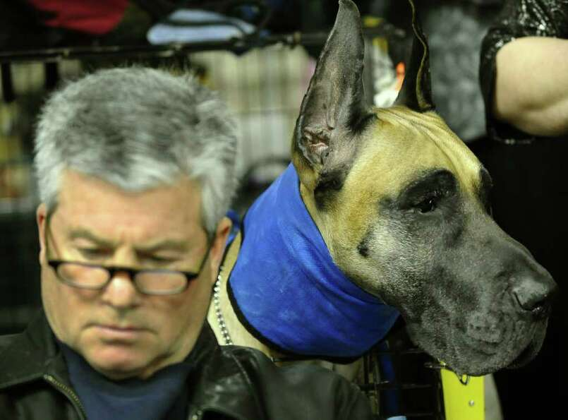 Ken Rodeman and Sebastian the Great Dane during the 135th Westminster Kennel Club Dog Show at Madiso
