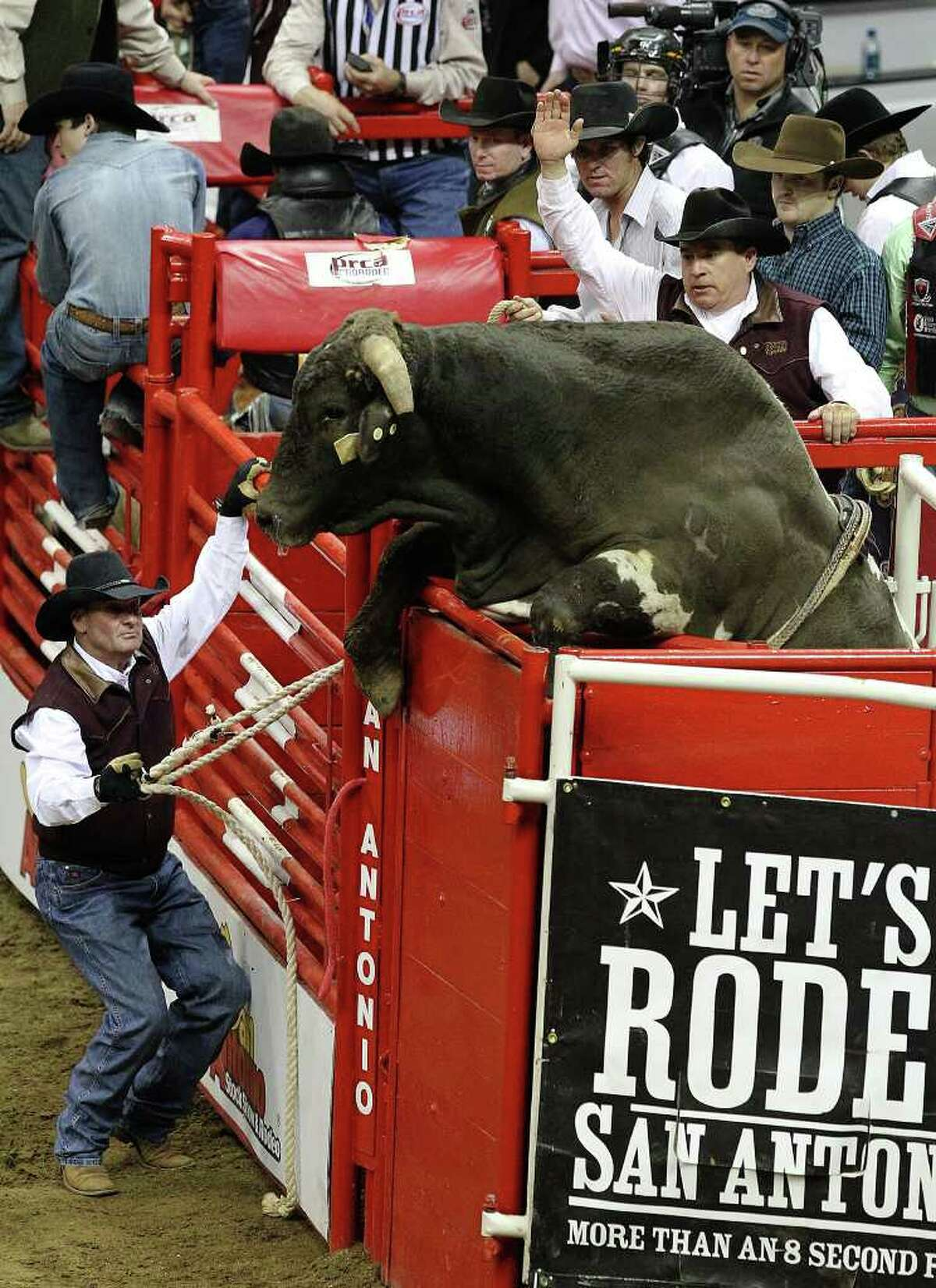 A bull jumps atop the alley on the way to a chute during the bull riding competition at the 2011 San Antonio Stock Show & Rodeo on Tuesday, Feb. 15, 2011. Kin Man Hui/kmhui@express-news.net