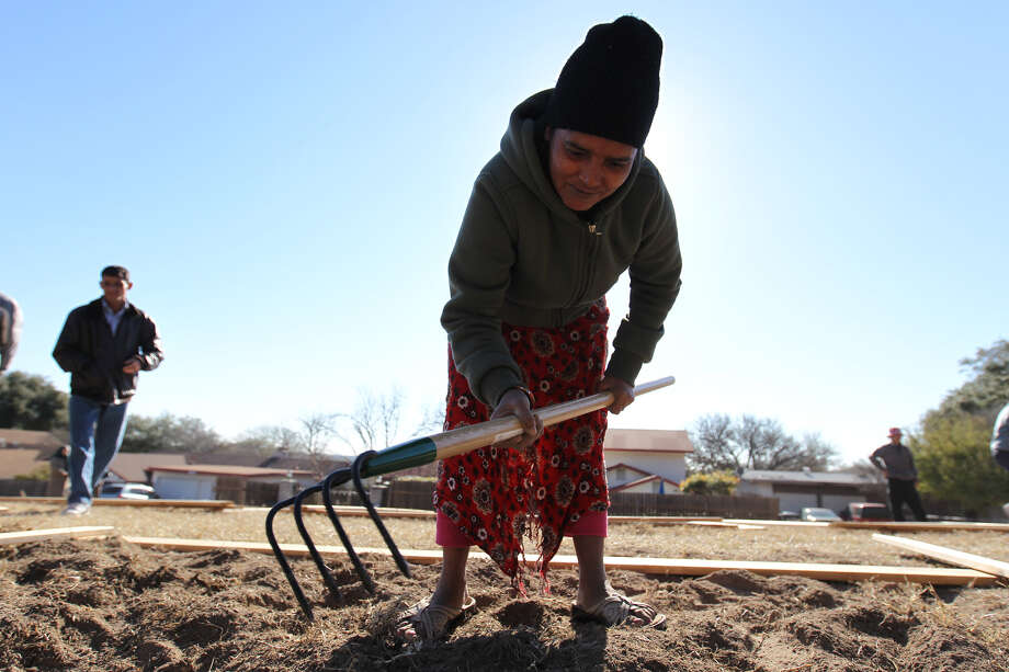 Bhutanese refugee Sari Maya Kharel weeds the soil during the community garden groundbreaking at St. Francis Episcopal Church on Saturday. Photo: Jennifer Whitney/Special To The Express-News