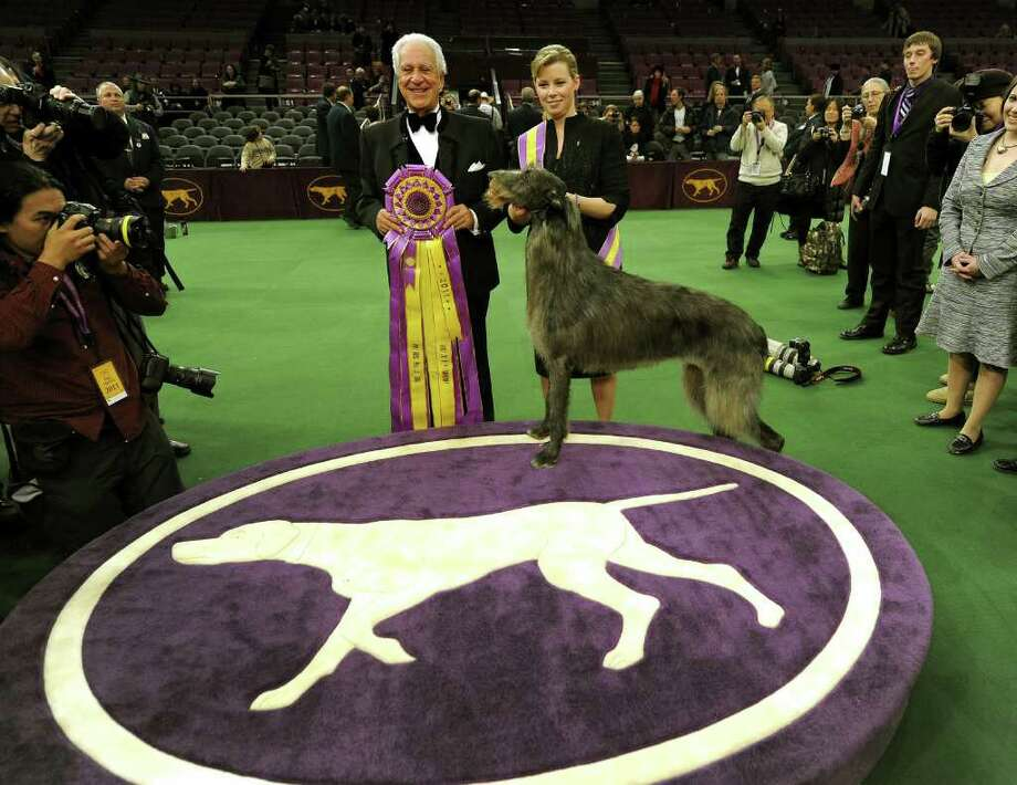 Handler Angela Lloyd and Hickory the Scottish Deerhound pose for photos after winning Best in Show during the 135th Westminster Kennel Club Dog Show at Madison Square Garden in New York, February 15, 2011. Holding ribbon is judge Paolo Dondina. AFP  PHOTO / TIMOTHY A. CLARY (Photo credit should read TIMOTHY A. CLARY/AFP/Getty Images) Photo: TIMOTHY A. CLARY