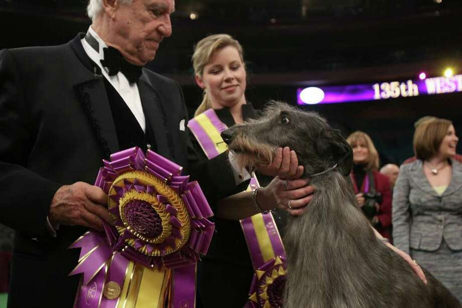 NEW YORK, NY - FEBRUARY 15:  A Scottish Deerhound named Foxcliffe Hickory Wind poses with her handler Angela Lloyd and show judge Paolo Dondina after winning Best in Show at the Westminster Kennel Club Dog Show on February 15, 2011 in New York City. The show, one of the most prestigious dog shows in the world, is being held at Madison Square Garden in New York City on February 14-15. Over 2,000 dogs competed in this year's show which also included six new breeds to the competition.  (Photo by Spencer Platt/Getty Images) Photo: Spencer Platt