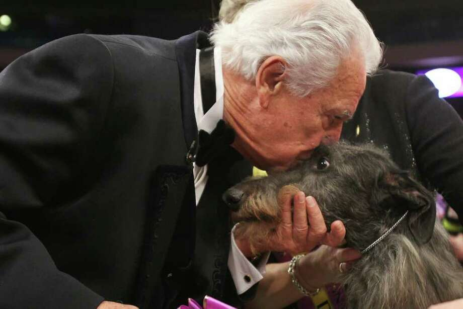 NEW YORK, NY - FEBRUARY 15:  A Scottish Deerhound named Foxcliffe Hickory Wind receives a kiss from show judge Paolo Dondina after winning Best in Show at the Westminster Kennel Club Dog Show on February 15, 2011 in New York City. The show, one of the most prestigious dog shows in the world, is being held at Madison Square Garden in New York City on February 14-15. Over 2,000 dogs competed in this year's show which also included six new breeds to the competition.  (Photo by Spencer Platt/Getty Images) Photo: Spencer Platt