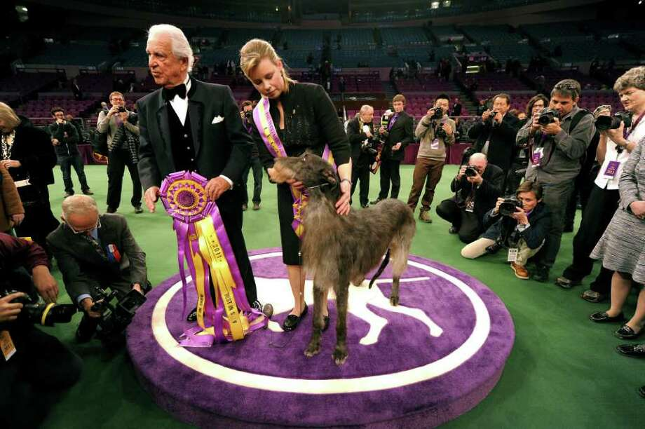 Handler Angela Lloyd and Hickory the Scottish Deerhound pose for photos after winning Best in Show during the 135th Westminster Kennel Club Dog Show at Madison Square Garden in New York, February 15, 2011. Holding ribbon is judge Paolo Dondina.AFP  PHOTO / TIMOTHY A. CLARY (Photo credit should read TIMOTHY A. CLARY/AFP/Getty Images) Photo: TIMOTHY A. CLARY