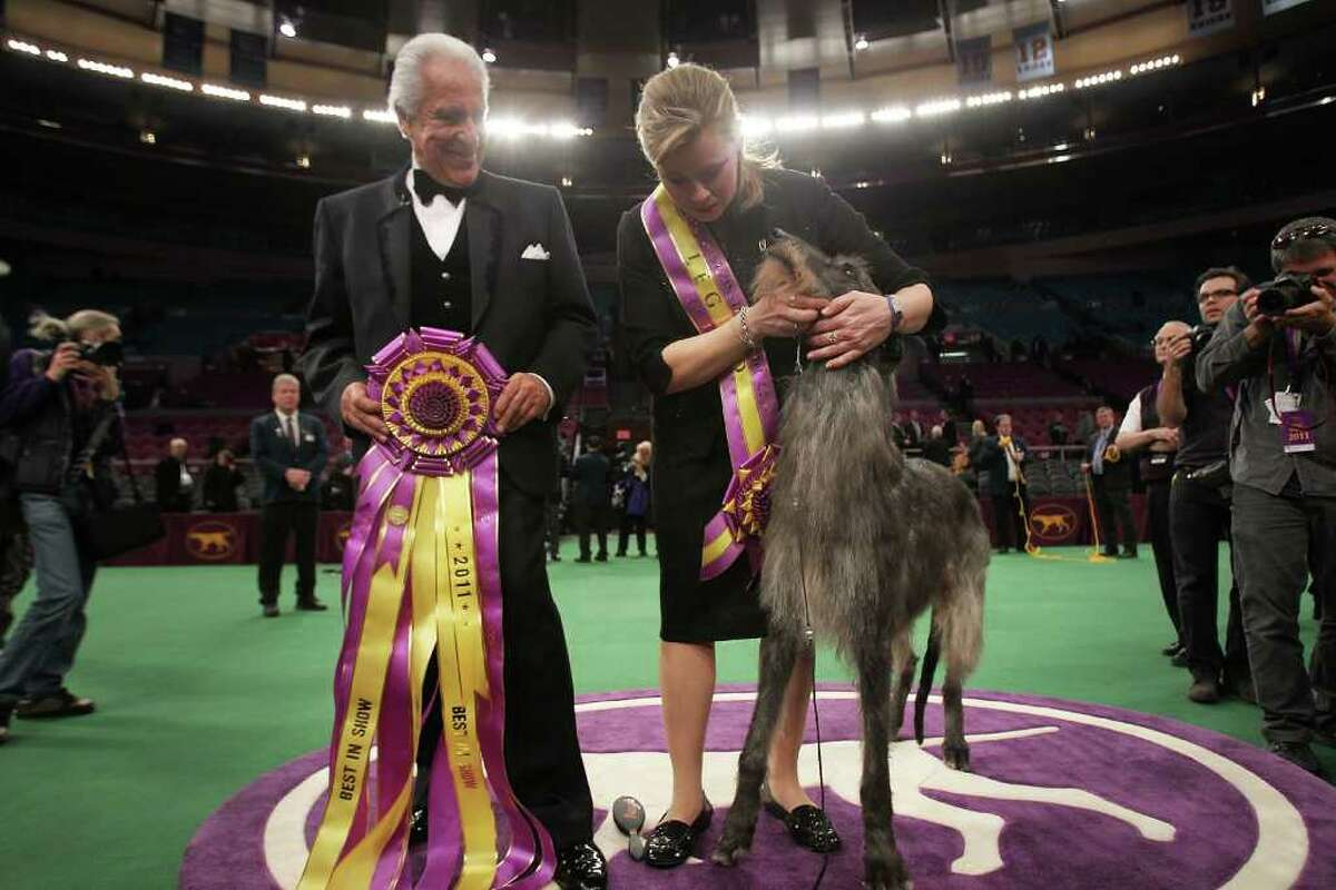NEW YORK, NY - FEBRUARY 15: A Scottish Deerhound named Foxcliffe Hickory Wind poses with her handler Angela Lloyd and show judge Paolo Dondina (L) after winning Best in Show at the Westminster Kennel Club Dog Show on February 15, 2011 in New York City. The show, one of the most prestigious dog shows in the world, is being held at Madison Square Garden in New York City on February 14-15. Over 2,000 dogs competed in this year's show which also included six new breeds to the competition. (Photo by Spencer Platt/Getty Images) *** Local Caption *** Paolo Dondina;Angela Lloyd
