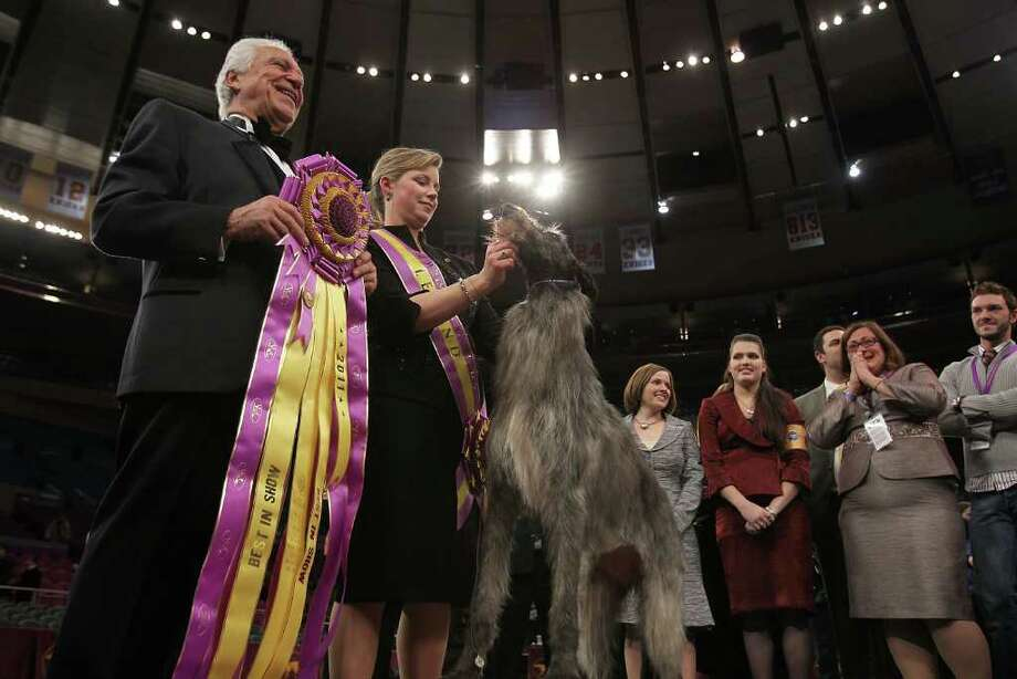 NEW YORK, NY - FEBRUARY 15:  A Scottish Deerhound named Foxcliffe Hickory Wind poses with her handler Angela Lloyd and show judge Paolo Dondina (L) after winning Best in Show at the Westminster Kennel Club Dog Show on February 15, 2011 in New York City. The show, one of the most prestigious dog shows in the world, is being held at Madison Square Garden in New York City on February 14-15. Over 2,000 dogs competed in this year's show which also included six new breeds to the competition.  (Photo by Spencer Platt/Getty Images) *** Local Caption *** Paolo Dondina;Angela Lloyd Photo: Spencer Platt, Getty Images / 2011 Getty Images