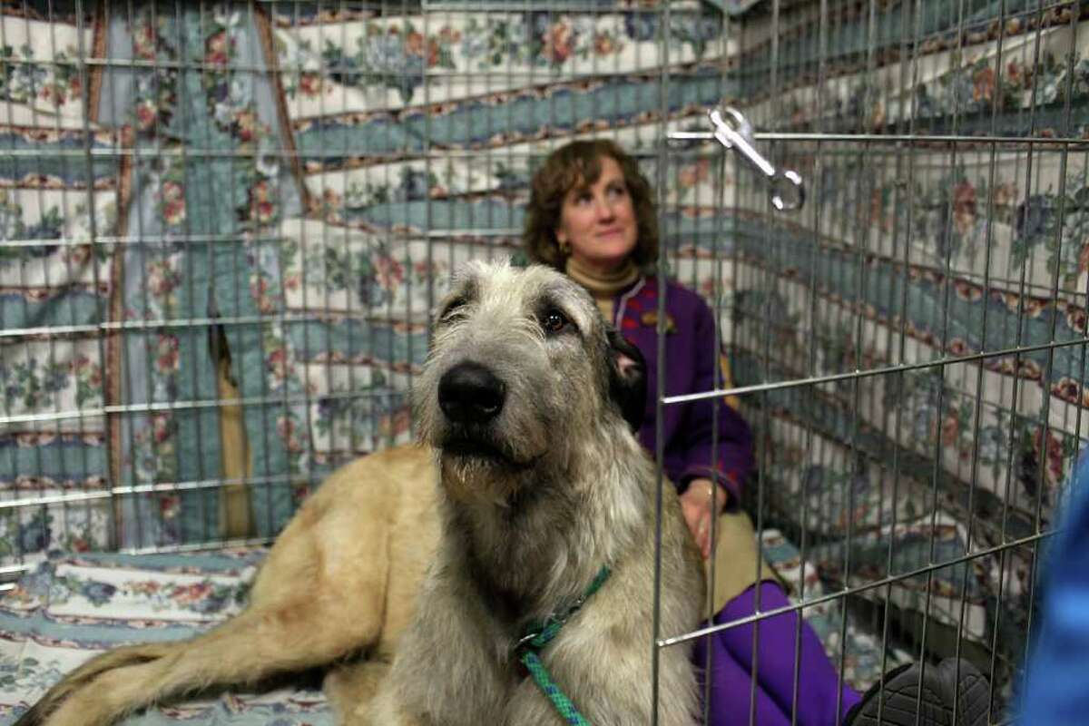 NEW YORK, NY - FEBRUARY 14: Donna Smith sits with her Irish Wolfound named Willow at the Westminster Kennel Club Dog Show at Madison Square Garden on February 14, 2011 in New York City. The show, one of the most prestigious dog shows in the world, is being held on February 14-15. Over 2,000 dogs will be competing in this year's show which will also include six new breeds to the competition. (Photo by Spencer Platt/Getty Images) *** Local Caption *** Donna Smith