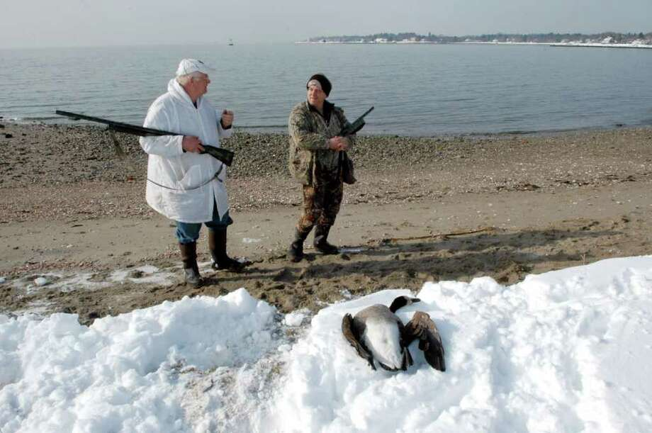 Hunters with their kill spotted at Sasco Beach in Fairfield on Saturday, Jan. 29, 2011. Hunters can be seen along the Connecticut shoreline during the winter waterfowl hunting season. While people wearing camouflage clothing and toting guns may surprise some beach goers, the hunters have a right to be there, officials say. Photo: Cathy Zuraw / Connecticut Post