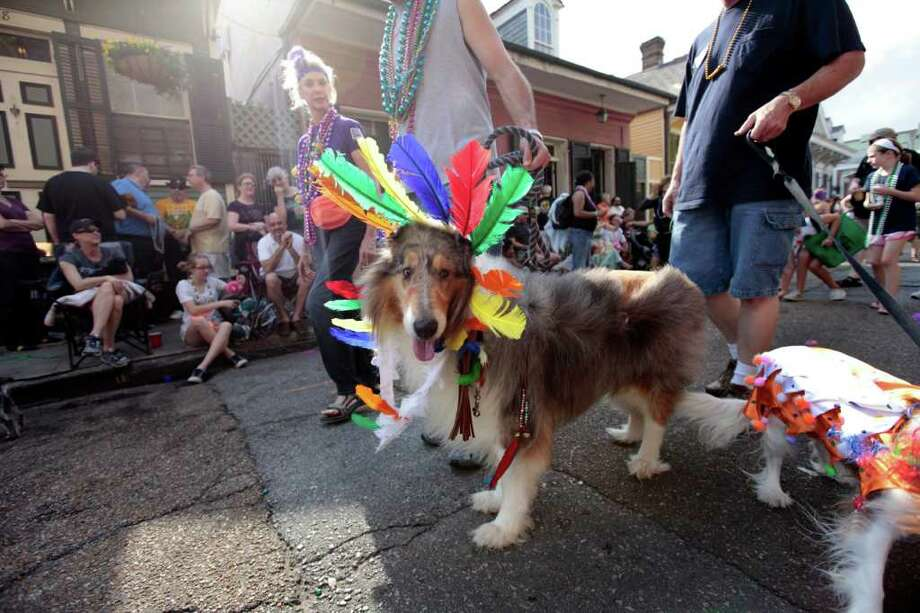 Dog owners and their dogs parade through the French Quarter during the Krewe of Barkus Mardi Gras parade in New Orleans, Sunday, Feb. 27, 2011. The parade of dogs and their owners, a twist on the Krewe of Bacchus, benefits animal welfare organizations. (AP Photo/Gerald Herbert) Photo: Gerald Herbert