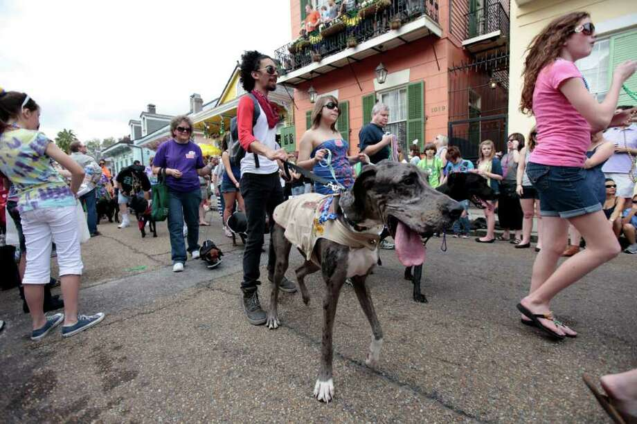 Dog owners and their dogs parade through the French Quarter during th2 Krewe of Barkus Mardi Gras parade in New Orleans, Sunday, Feb. 27, 2011. The parade of dogs and their owners, a twist on the Krewe of Bacchus, benefits animal welfare organizations. (AP Photo/Gerald Herbert) Photo: Gerald Herbert