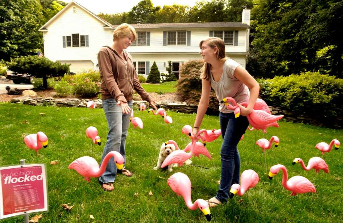 Homeowner Dawn Mango, 44, left, talks with Youth Group member Emily Nixon, 16, as Emily collects pink flamingos from the yard of Dawn's New Milford home on Wednesday Sept.16,2009. The flamingos are delivered during the night to surprise the homeowner. This is a fundraiser to benefit the New Milford United Methodist Church.