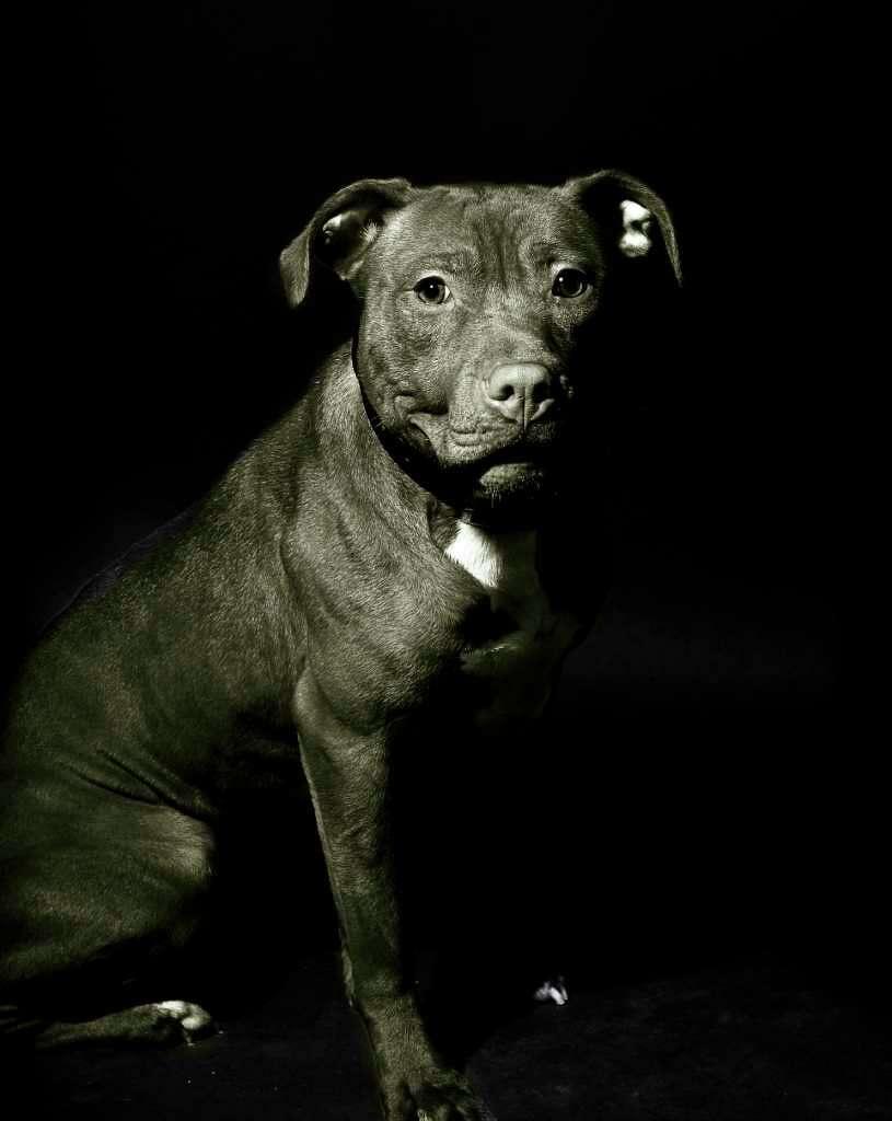 Pet cause Staples photographers focus on shelter dogs plight