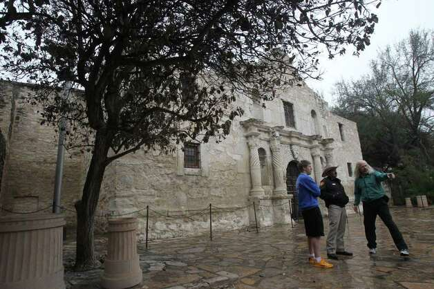A Mexican olive tree grows in front of the Alamo. It, too suffered some damage from recent freezes but it appers that it will recover. JOHN DAVENPORT/jdavenport@express-news.net Photo: SAN ANTONIO EXPRESS-NEWS
