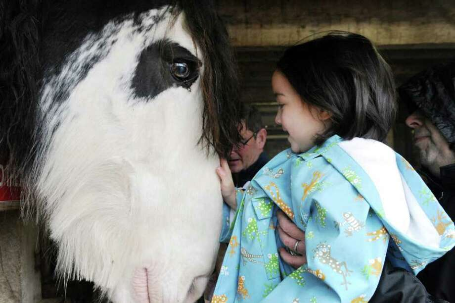Celebrate the Year of the Horse at the Stamford Museum and Nature Center by getting up close and personal with some of their horses and donkeys on Sunday. Find out more.  Photo: Keelin Daly / Stamford Advocate