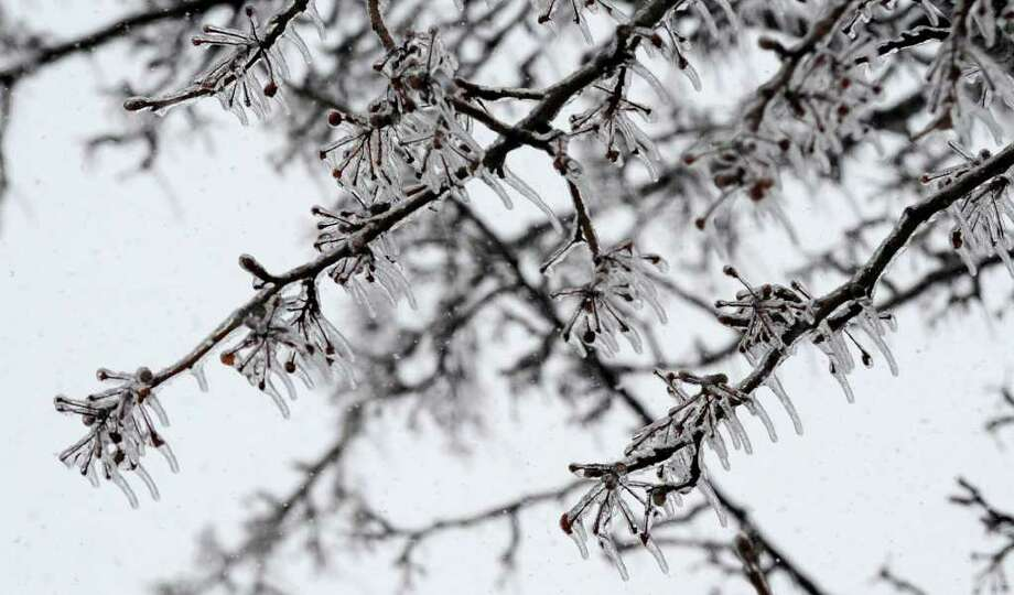 Ice covers a tree Monday on Sand Creek Road in Colonie, as another storm hit the area with heavy wet snow, sleet and freezing rain. (Skip Dickstein / Times Union) Photo: SKIP DICKSTEIN / 2008