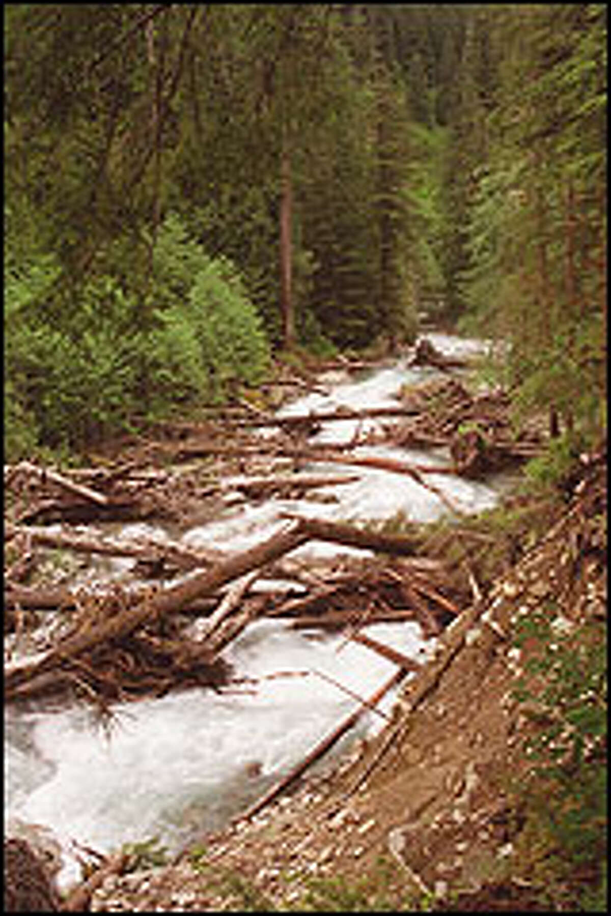 Miners once used the trail along Troublesome Creek as a route into the Monte Christo region.