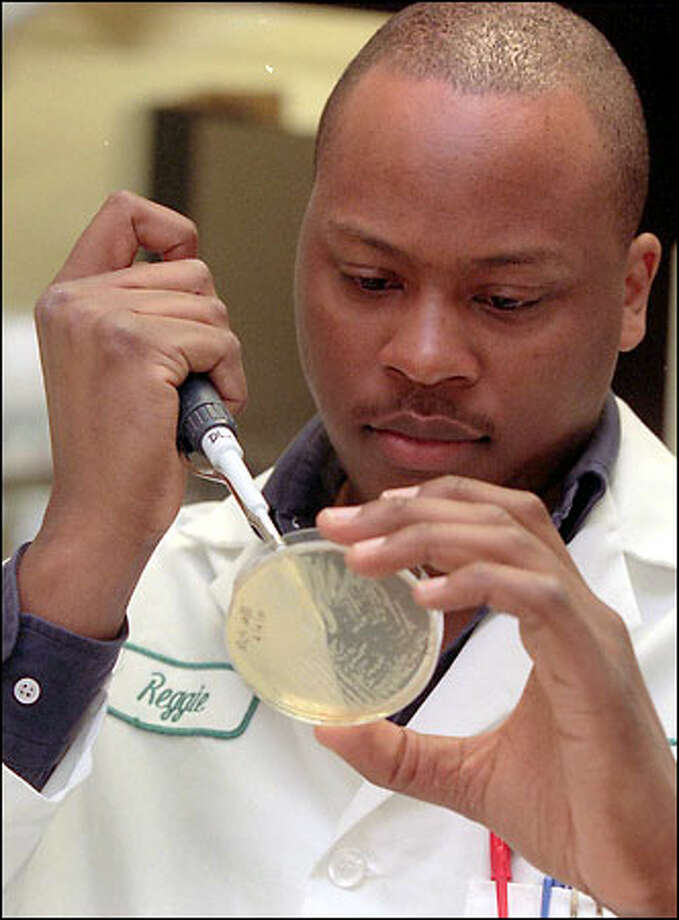 Reggi Kimbrough, a sequencing and bioinformatics specialist for Corixa, examines P. acnes micro-bacterial colonies. Photo: Phil H. Webber/Seattle Post-Intelligencer