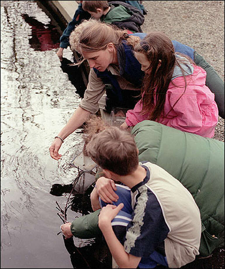 Discovery Park naturalist Cinny Burrell, center, shows a young nature-walk group how to get caddis-fly larvae from a pond. Photo: Phil H. Webber/Seattle Post-Intelligencer
