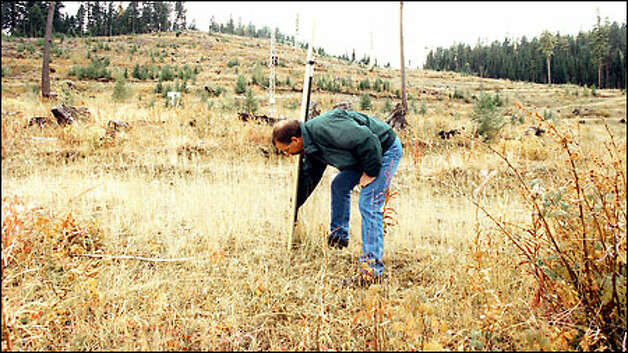 Jeff White, environmental superintendent for Battle Mountain Gold, checks a snow gauge on the site of the proposed mine. His company says the mine would observe the world's strictest environmental regulations and won't do the kind of damage seen elsewhere. Photo: Gilbert W. Arias/Seattle Post-Intelligencer