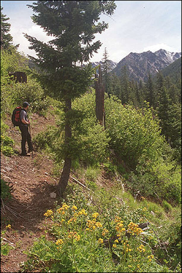Hiker Randy Busch pauses in a clearing along the Paris Creek Trail to bask in the sun-soaked scenery. Photo: KAREN SYKES
