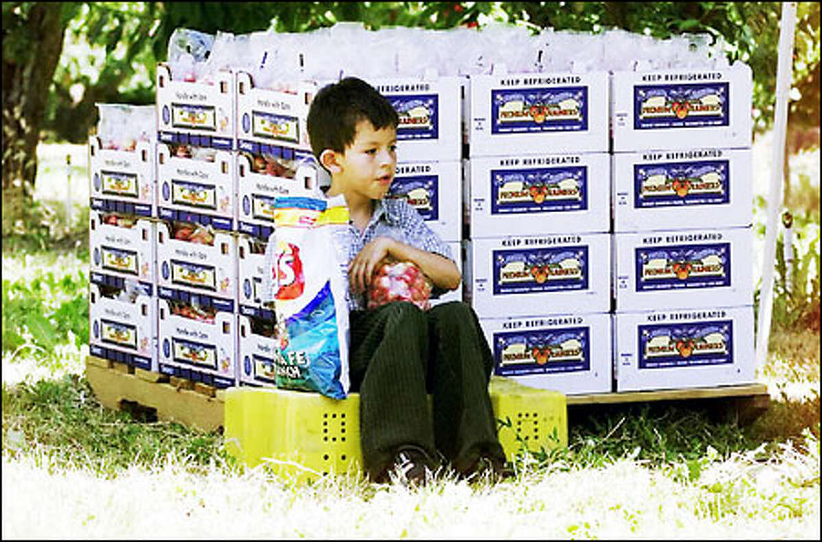 Life's a box of cherries -- and a bag of chips -- for Christian Mendoza, 7, visiting relatives at the Olmstead cherry orchards in Grandview.See more photos in the gallery.
