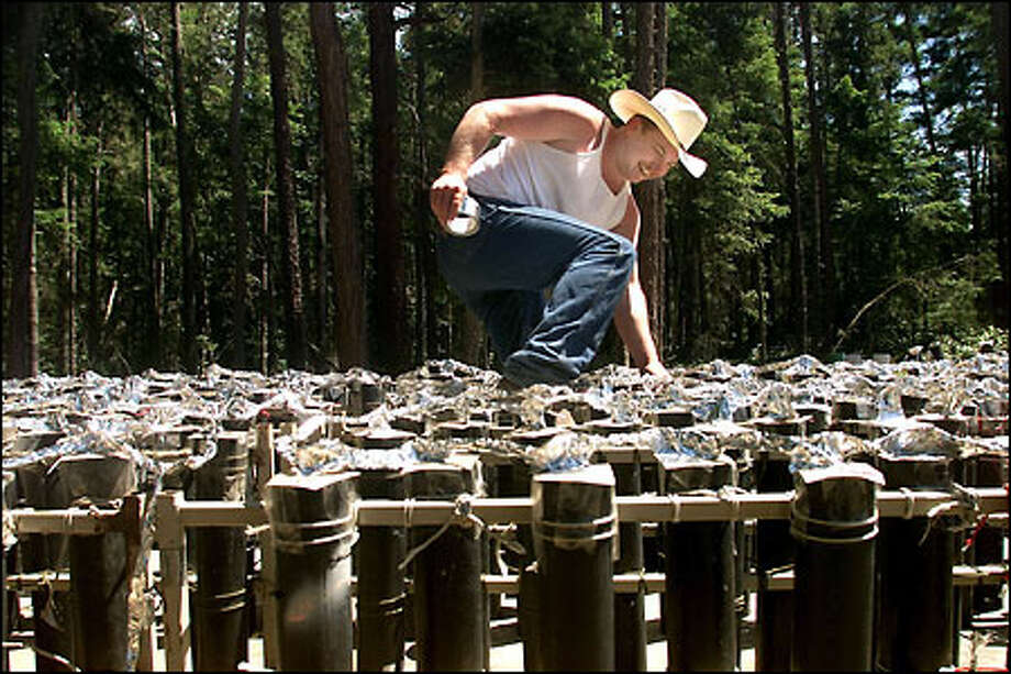 Jeff King looks for exposed fuses on one of the trailers holding mortars that will be used in the finale of Lopez Island's annual fireworks show. King and Dwight Walters, the creative force behind the show, will fire the action with a maze of switch boxes and wires. Photo: Paul Kitagaki Jr./Seattle Post-Intelligencer