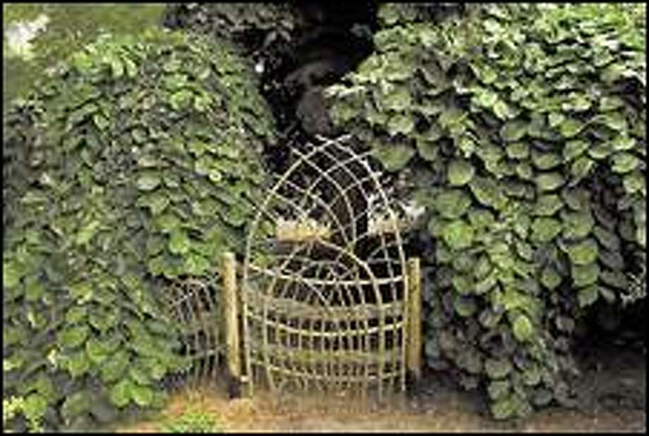 A distinctive gate made from wattle adorns a natural fence built by Sue Skelly at the home of Lee Neff in Seattle. Click for a larger image Photo: PAUL KITAGAKI JR./P-I