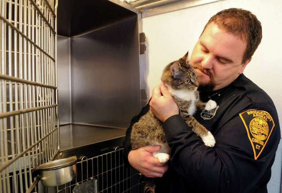 Bridgeport's Chief Animal Control Officer Jimmy Gonzalez holds one of the cats at the city's animal control center Thursday, March 10, 2011. Photo: Autumn Driscoll / Connecticut Post