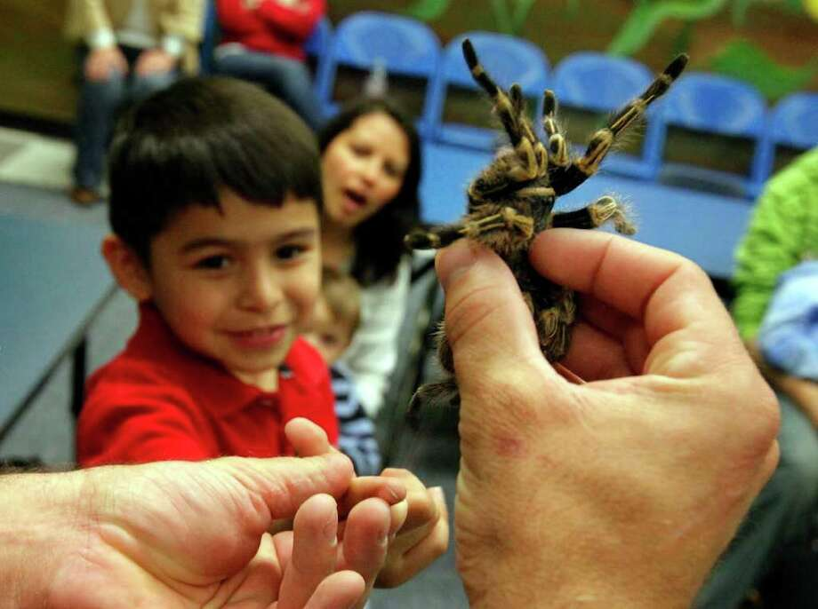 Animal World and Snake Farm's Jarrod Forthman shows a Costa Rican zebra leg tarantula to Abraham Guerrero, 7, during a presentation at the San Antonio Children's Museum on Thursday, March 10, 2011. The Snake Farm visits the museum once a month to educate children about reptiles and to dispel myths and fears about the creatures. Photo: KIN MAN HUI, Kin Man Hui/Express-News / kmhui@express-news.net