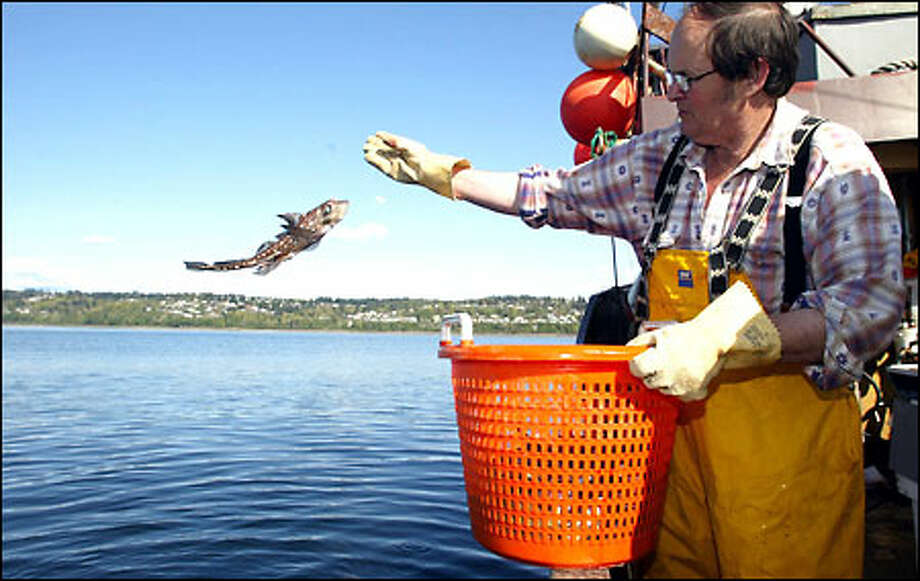 Jim Beam tosses a ratfish back into the waters of Puget Sound near Mukilteo during the first day of a state Department of Wildlife survey of the Sound's bottomfish. Photo: Mike Urban/Seattle Post-Intelligencer