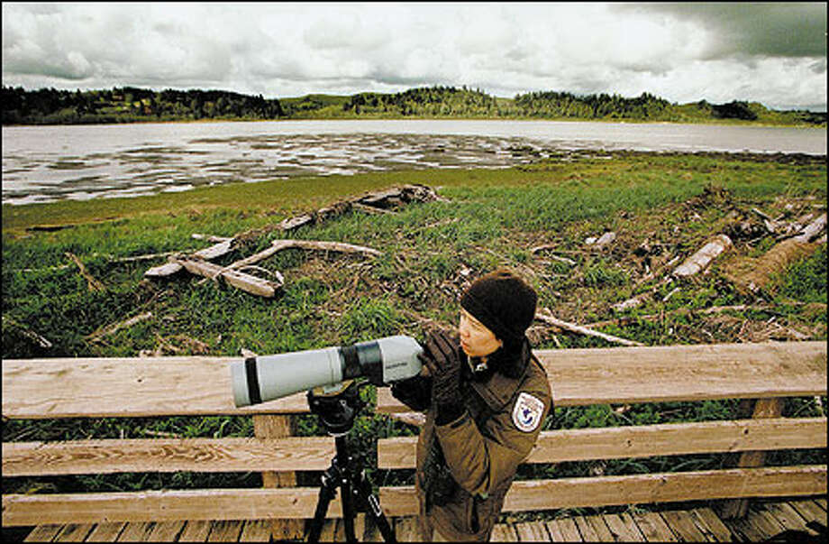 Nanette Seto, a wildlife biologist with the U.S. Fish and Wildlife Service, looks for shorebirds at the Grays Harbor National Wildlife Refuge. Photo: Dan DeLong/Seattle Post-Intelligencer